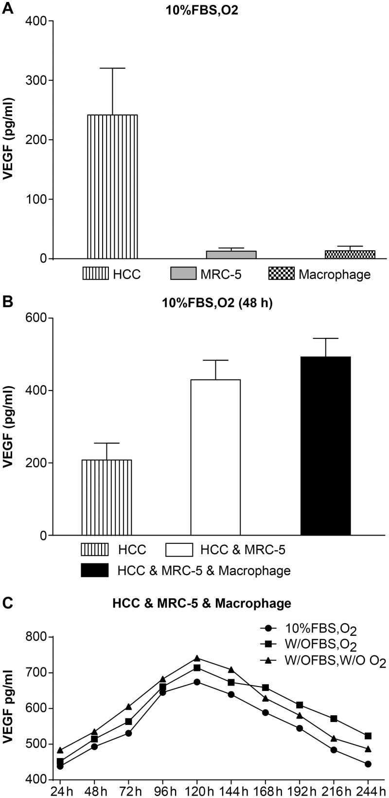 The expression of VEGF. (A) Expression of VEGF in HCC, MRC-5, and macrophage mono-cultures groups. Expression of VEGF in the HCC mono-culture group was significantly higher than expression in the MRC-5/macrophage mono-culture group under 10% FBS and O 2 culture conditions. (B) Expression of VEGF in HCC, MRC-5, and macrophage co-culture groups compared with the HCC mono-culture group. Expression of VEGF in the HCC MRC-5 Macrophage co-culture group was higher than in the HCC MRC-5 co-culture group and the HCC mono-culture group cultured with 10% FBS and O 2 for 48 h. (C) Expression of VEGF in HCC, MRC-5, and macrophage co-culture groups under different co-culture conditions. The expression of VEGF in cells cultured w/o FBS (starved of FBS but with O 2 ), w/o FBS and w/o O 2 (without FBS and without O 2 ) was higher than that in 10% FBS or O 2 (10% FBS cell culture medium with O 2 ), while the expression of VEGF in the three different conditions first increased and then decreased.