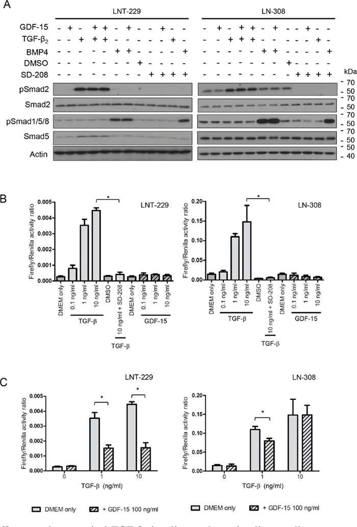 GDF-15 effects on the canonical <t>TGF-β</t> signaling pathway in glioma cells A. LNT-229 or LN-308 cells were exposed to GDF-15 (100 ng/ml), BMP-4 (5 ng/ml) or TGF-β 2 (10 ng/ml) as indicated for 24 h, harvested and assessed for pSmad2, Smad2/3, pSmad1/5/8 and Smad5 levels by immunoblot. B. LNT-229 or LN-308 cells transfected with the pGL3-SBE4-Luc reporter plasmid were exposed to TGF-β 2 , GDF-15, <t>SD-208</t> or combinations thereof as indicated for 24 h, and analyzed for firefly/renilla luciferase activity. C. LNT-229 and LN-308 cells transfected with the pGL3-SBE4-Luc reporter plasmid were pre-exposed to GDF-15 for 1.5 h or not as indicated, subsequently treated with TGF-β 2 for 24 h and analyzed as in (B) (* p