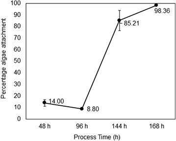 Algae attachment efficiency in the fungal biofilm growth at different process time