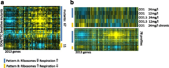 Comparative transcription pattern analysis. a The Microarray expression pattern of DON and TTC sensitive mutants highlights a slow growth expression pattern in many strains. b DON treated cells have an initial dose dependent slow growth expression pattern (Type A: blue bars) which is inverted (Type B: orange bars) at later time points. Expression values of the genes of the DON treatment are sorted in parallel to the heat map of the microarray compendium depicted below. Expression values were obtained from http://deleteome.holstegelab.nl/
