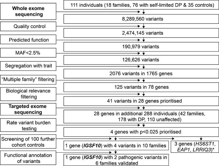Flowchart of exome sequencing filtering outcomes Whole exome sequencing was initially performed on <t>DNA</t> extracted from the peripheral blood leukocytes of 111 individuals from the 18 most extensive families from our cohort (76 with DP and 35 controls). The exome sequences were aligned to the UCSC hg19 reference genome. Picard tools and the genome analysis toolkit were used to mark <t>PCR</t> duplicates, realign around indels, recalibrate quality scores, and call variants. Variants were analyzed further and filtered for potential causal variants using filters for quality control, predicted functional annotation, minor allele frequency (MAF), segregation with trait, variants in multiple families, and biological relevance (see Materials and Methods and Appendix Table S1 for further information on filtering criteria). Targeted exome sequencing using a Fluidigm array of 28 candidate genes identified post‐filtering was then performed in a further 42 families from the same cohort (288 individuals, 178 with DP and 110 controls). Variants post‐targeted resequencing were filtered using the same criteria as the whole exome sequencing data. Rare variant burden testing was performed for all genes selected for targeted resequencing, in order to rank candidate genes post‐targeted resequencing. A multiple comparison adjustment was applied to the set of 28 P ‐values post hoc (Benjamini et al , 2001 ). Screening of 100 further cohort controls was via conventional Sanger sequencing. Functional annotation of the variants as described elsewhere in Materials and Methods. DP, delayed puberty. *data unpublished.