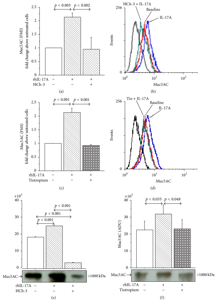 Effect of Hemicholinium-3 (HCh-3) or Tiotropium on Muc5AC production in 16-HBE cells. Cells were incubated for 1 h with HCh-3 (50 μ M) or Tiotropium (100 nM) before addition of rhIL-17A 20 ng/mL for 24 h to evaluate ((a)–(d)) Muc5AC protein expression by flow cytometry. Bars represent mean ± SD of fluorescence mean intensity (FMI) of three separate experiments. Data were plotted as fold change compared to untreated cells. Representative flow cytometry of Muc5AC is shown. ((e)-(f)) Muc5AC protein expression by western blot. Bars represent mean ± SD of arbitrary densitometric units (ADU) of three different experiments. Representative western blot analysis of Muc5AC protein is shown. Statistical analysis was performed by ANOVA followed by Fisher's PLSD multiple comparison test. The black curve represents the anti-IgG isotype negative control antibody.