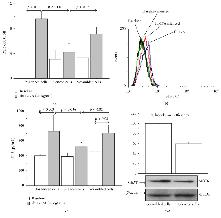 Silencing of ChAT mRNA reduced Muc5AC expression and IL-8 release in 16-HBE cells stimulated with rhIL-17A 20 ng/mL for 24 h. Cells were stimulated and analyzed to evaluate (a) Muc5AC expression in unsilenced cells and in cells transfected with siRNA for ChAT or scrambled siRNA by flow cytometry. Bars represent mean ± SD of fluorescence mean intensity (FMI) of three separate experiments. (b) Representative flow cytometry of Muc5AC is shown. (c) IL-8 release (pg/mL, by ELISA) in unsilenced cells and in cells transfected with siRNA for ChAT or scrambled siRNA. The values shown are the mean ± SD for three separated experiments. (d) Knockdown efficiency (%) of ChAT mRNA on ChAT protein expression. Bars represent mean ± SD of three separate experiments. Statistical analysis was performed by ANOVA test followed by Fisher's PLSD multiple comparison test.