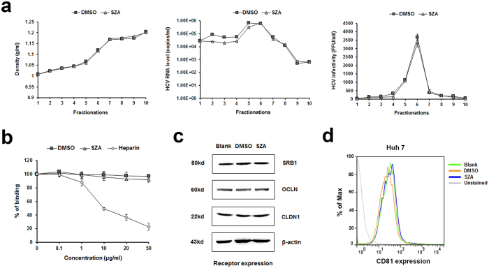 SZA does not affect virus integrity, binding or entry factors expression. ( a ) Concentrated HCVcc of JFH-1 strain was incubated with SZA (20 μg/ml) or DMSO at 37 °C for 2 h before the compound was removed by filters. Iodixanol gradient ultracentrifugation was then performed. Each of the ten gradient fractions was weighed to calculate density (left panel). HCV RNA levels were determined by RT-qPCR (middle panel) and viral infectivity by reinfection of naïve Huh7 cells (right panel). ( b ) The effect of SZA on HCV binding. Huh7 cells were incubated with HCVcc at 4 o C for 2 h to facilitate virus binding. Indicated concentrations of either SZA or heparin was added. The quantity of bound viral particles was determined by RT-qPCR. Results are plotted as % of binding compared to untreated group. Data shown as mean ± SD of three independent experiments in the above figures. ( c ) The effect of SZA on the expression levels of cellular entry factors of HCV. Huh7 cells were incubated with SZA (50 μg/ml) for 4 h, and the expression levels of SRB1, CLDN1 and OCLN were determined by western blotting, ( d ) and CD81 by flow cytometry 24 h post-incubation.
