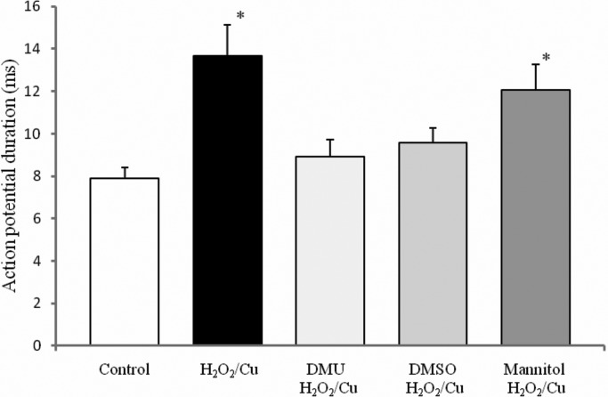 The effects of the antioxidants on the duration of Retzius nerve cells' action potentials prolonged by H 2 O 2 /Cu(II). The neurotoxic effect of H 2 O 2 /Cu(II) on spontaneous spike electrogenesis of the Retzius neurons was reduced in the presence of the dimethylthiourea (1 mM) and dimethyl sulfoxide (1%), but not the mannitol (5 mM). The measures are expressed as mean±s.d.; * P