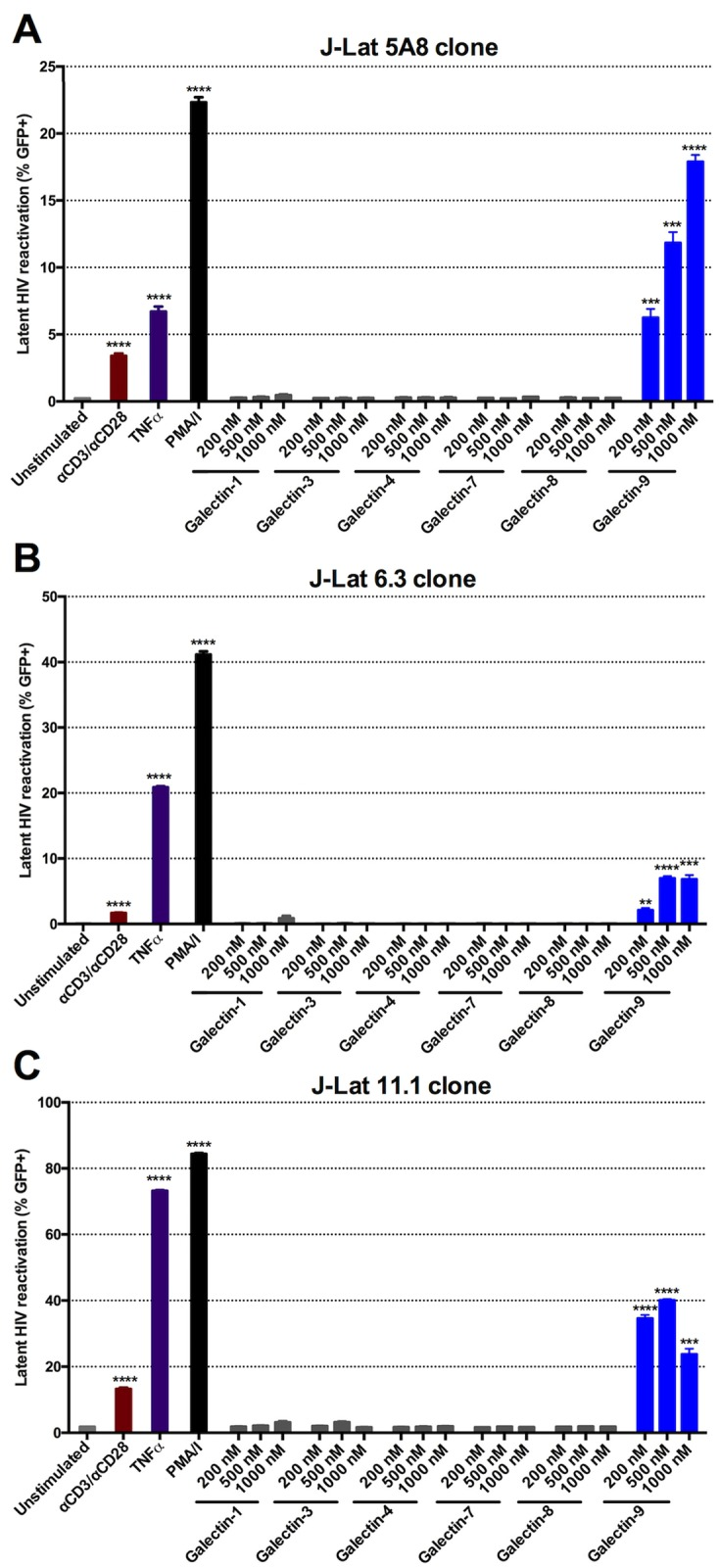 rGal-9 is a potent mediator of HIV transcription in vitro . in vitro HIV reactivation in the J-Lat latency model (A) 5A8 clone, (B) 6.3 clone, and (C) 11.1 clone by varying doses of rGal-9 and other galectins (-1, -3, -4, -7, -8, and -9) after 24 hours of stimulation. αCD3 /αCD28 antibodies conjugated to beads, PMA/ionomycin (16 nM/500 nM), and TNFα (10 ng/ml) were used as positive controls. J-Lat cells were analyzed by flow cytometry to assess HIV-encoded GFP expression. Mean ± SEM is displayed, and statistical comparisons were performed using two-tailed unpaired t tests. * = p