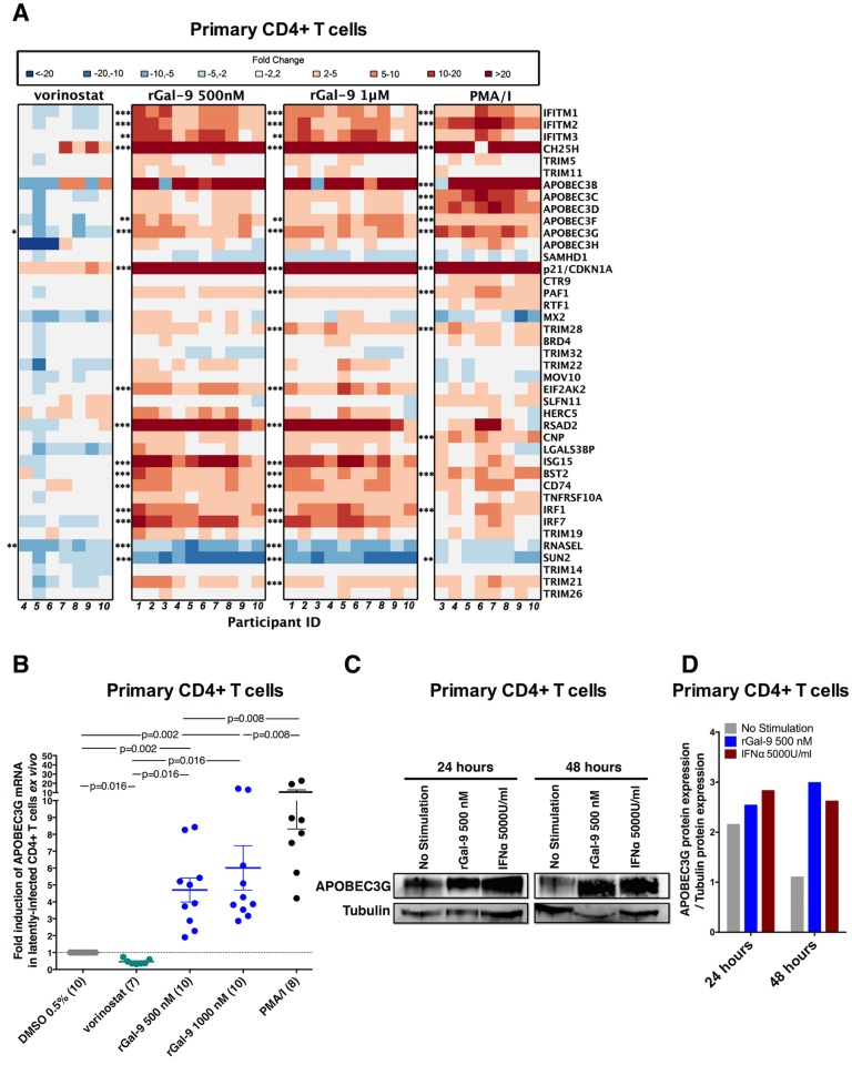 rGal-9 induces the expression of several anti-HIV host restriction factors including APOBEC3G ex vivo . ( A ) Heat map representing expression levels of host restriction factors in CD4+ T cells isolated from ART-suppressed individuals, after treatment with either 0.5% DMSO as negative control, 500 nM rGal-9, 1000 nM rGal-9, 1μM vorinostat, or a combination of PMA (2 nM) and Ionomycin (0.5 μM). Heat colors indicate fold modulation compared to the DMSO control. Red indicates induction of expression, and blue indicates reduction of expression. Statistical comparisons were performed using t tests, and p values were adjusted for multiple comparisons using false discovery rate. Asterisks indicate > 3-fold, statistically significant modulation of gene expression as compared to DMSO control, as follows: * = FDR
