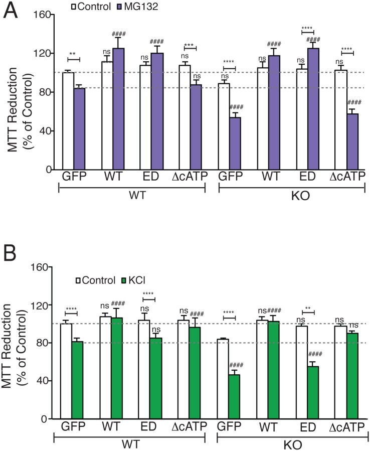 NMNAT2 is required to protect neurons against proteotoxicity and excitotoxicity. Cell viability was evaluated by the MTT reduction assay. ( A ) MTT reductions of NMNAT2 WT and KO neurons overexpressing GFP or NMNAT2-WT, -ED, or -ΔcATP after DMSO or MG132 treatment. *and # indicate significant differences in DMSO or in MG132-treated cells between GFP control and transfected test NMNAT2 construct, respectively ( n = 3 independent experiments). ( B ) MTT reduction by DIV14 NMNAT2 WT and KO neurons overexpressing GFP or NMNAT2-WT, -ED, or -ΔcATP after DMSO or KCl treatment ( n = 3 independent experiments). *and # indicate significant differences in DMSO or in KCl-treated cells between GFP control and transfected NMNAT2 construct, respectively. n = 3 with triplicates per summary. Individual values for 6A and B are provided in S1 Data . ns, not significant, * /# p