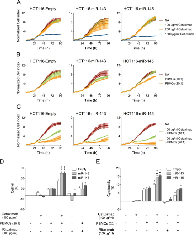 miR-143 or miR-145 overexpression increases cetuximab-mediated ADCC in HCT116 cells HCT116-Empty, HCT116-miR-143 and HCT116-miR-145 cells were plated on 96-well E-Plate and used on xCELLigence System, allowed to grow for 96 h. Cells were grown in medium alone or treated with increasing concentrations of cetuximab, and or PBMCs. ( A ) Red (NA) represents cells grown in medium alone, green represents growth with 100 μg/ml cetuximab, orange with 250 μg/ml cetuximab, and blue with 1600 μg/ml cetuximab. ( B ) Cells were grown in medium alone (red), or treated with PBMCs at (10:1) green or (20:1) orange. ( C ) Cells were grown in medium alone (red), or treated with 100 μg/ml cetuximab and PBMCs at (10:1) green or (20:1) orange. Cell index values were normalized at the time of the addition. Normalized cell index values are plotted in 1 h increments as the average of two replicates together with standard deviation. ( D ) Quantification of normalized cell index was performed at 72 h, by measuring the change in area under the curve compared to non-treated controls, and are presented as percentage of cell kill for 100 μg/ml cetuximab treatment or 100 μg/ml rituximab (control antibody), alone or with PBMCs (20:1). ( E ) Quantification of cytotoxicity was performed at 48 h, by measuring the amount of LDH released into the culture supernatant, and is presented as percentage of cytotoxicity for 100 μg/ml cetuximab treatment or 100 μg/ml rituximab (control antibody), alone or with PBMCs (20:1), compared with non-treated controls. The results are expressed as the mean ± SEM, from at least three independent experiments. ** p