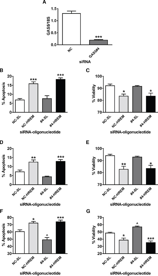 Effect of the GAS5 HREM <t>DNA</t> oligonucleotide on basal and UV-C-induced cell death after silencing of endogenous GAS5 expression in MCF7 cells Cells (n = 4 cultures) were transfected with either GAS5 siRNA (GAS5#4; targets exon 12 sequence) or negative control (NC) siRNA and, after 24 h, transfected with either the GAS5 HREM DNA oligonucleotide (HREM) or stem loop (SL) control DNA oligonucleotides. After 20 h, cells were irradiated with UV-C light, then plated for assessment of cell survival after a further 48 h. The GAS5#4 siRNA markedly reduced GAS5 lncRNA levels at 24 h post -transfection (panel A ) i.e. , immediately prior to <t>nucleofection</t> of DNA oligonucleotides. The HREM oligonucleotide induced apoptosis (panel B ) and decreased culture viability (panel C ) at 20 h post -transfection, irrespective of endogenous GAS5 lncRNA levels; a similar pattern was found for apoptosis (panel D ) and culture viability (panel E ) in mock-irradiated controls ( i.e. at 68 h post -oligonucleotide transfection). Silencing of GAS5 attenuated UV-C induced apoptosis (panel F ) and the associated loss of culture viability (panel G ) at 48 h post -irradiation, but had no effect cell death induction by the HREM oligonucleotide. Panel A: *** P