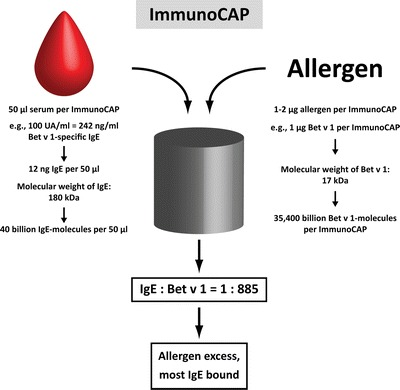 Example of the calculation of the ratio of allergen-specific IgE and allergen molecules in a test system using allergen excess (e.g., ImmunoCAP).