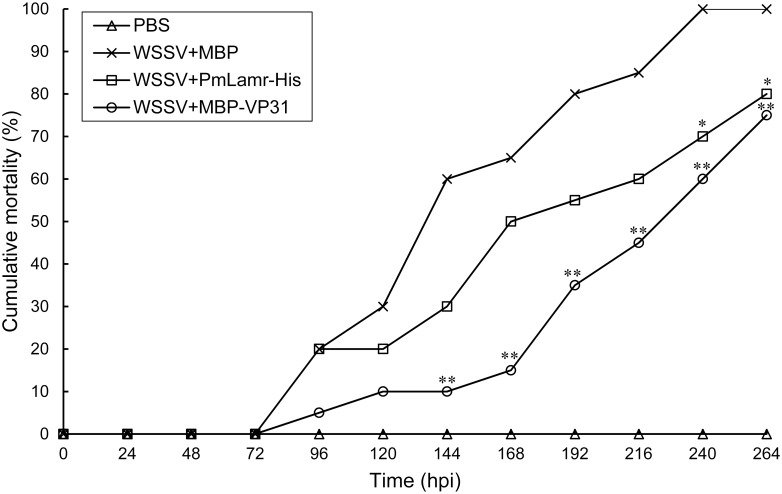 Cumulative post-challenge shrimp mortality. Shrimp were challenged with inoculum containing WSSV mixed with PmLamr-His (WSSV+PmLamr-His), or inoculum containing WSSV mixed with MBP-VP31 (WSSV+MBP-VP31). Asterisks indicated differences between positive and experimental groups (**P