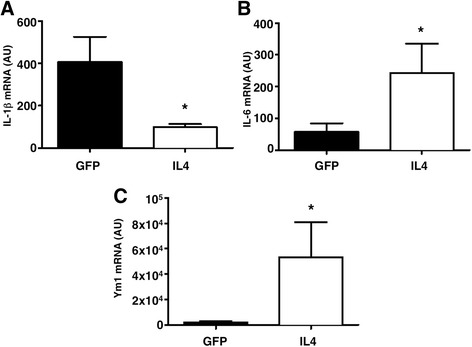IL4 gene therapy induces M2 markers and IL6 expression in CNS-infiltrating <t>CD11b</t> + cells in vivo. mRNA levels of IL6, IL-1β, and YM1 were measured by real-time RT-PCR in CD11b + cells recovered from the CNS of EAE mice treated intracisternally with an IL4-expressing (IL4) or a GFP-expressing (GFP) lentivirus. IL4 gene therapy induces a decrease of IL-1β ( a ), and an increase of IL6 ( b ) and Ym1 ( c ), as compared to control-treated mice. n = 3 for each group. Gapdh has been used as a housekeeping gene. Data are shown as arbitrary units (AU ± standard deviation). * P