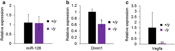 Expression of miR-126 and its target genes Dnmt1 and Vegfa in the DRG from Mecp2 -null mouse. a Relative expression of miR-126 in the DRG showed comparable expression in Mecp2 -null and wild-type littermates. U6 was used for normalization. b Dnmt1 and c Vegfa expression was decreased in the DRG from Mecp2 -null mouse, indicating MeCP2 has a role in regulating expression of Dnmt1 and Vegfa. Gapdh was used as a normalizer. Significance determined using unpaired Student's t test, p value *