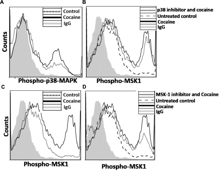 Induction of p38 MAPK/MSK1 signaling cascade in MDMs. MDMs were cultured in the absence or presence of 25 μM cocaine and analyzed by flow cytometry to determine the levels of (A) phosphorylated p38 MAPK and (B) phosphorylated MSK1. To determine that cocaine specifically targets p38 MAPK/MSK1 pathway, MDMs were pretreated with 10 μM p38 MAPK inhibitor (SB-203580) or 10 μM MSK1 inhibitor (SB-747651A) prior to cocaine treatment. Thereafter, cells were harvested and analyzed by flow cytometry to determine the (C) effects of p38 MAPK inhibitor on MSK1 phosphorylation, and (D) effects of MSK1 inhibitor on MSK1 phosphorylation.
