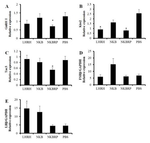 Expression levels of GnRH I (A), Kiss2 (B) andtac3 (C) mRNAs in the brains and FSHβ (D) and LHβ (E) mRNAs in the pituitaries of Nile tilapia injected either with LHRH, NKB, NKBRP or PBS. Relative abundance of the mRNAs in the brains was normalized to the amount of GAPDH and β-actin and in the pituitaries was normalized to the amount of GAPDH by the comparative threshold cycle method using qRT-PCR. Results are means ± SEM (n=6–8). * indicates significant difference from PBS group (P