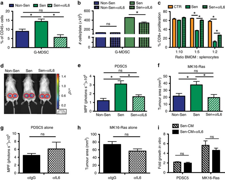 IL-6 within senescent microenvironments mediates immunosuppression and tumour promotion. ( a ) Flow cytometry for G-MDSC following IL-6 depletion in non-senescent (Non-Sen) or senescent (Sen) isografts. * P value