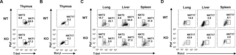 The development of iNKT1 (Plzf low T-bet high ), iNKT2 (Plzf high T-bet lowh ) and iNKT17 (Rorγt high ) cells in Gfi1 -deficient mice. <t>iNKT</t> cells were purified by <t>FACS</t> sorting and the intracellular staining of the indicated transcription factors was performed. The expression of Plzf and T-bet in the thymus (A) and the indicated peripheral organs (C) , and the patterns of Plzf and Rorγt in the thymus (B) and the indicated peripheral organs (D) are shown.