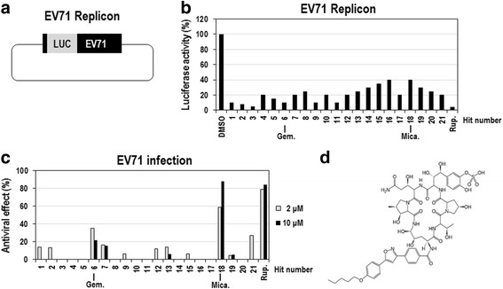 Identification of micafungin as an <t>anti-EV71</t> inhibitor from a screen of the <t>FDA-approved</t> drug library. a Schematic diagram of DNA encoding the EV71 replicon. b Vero cells were transfected with in vitro-transcribed EV71-replicon RNAs, immediately treated with 968 FDA-approved drugs (10 μM) for 8 h, and then assayed for firefly luciferase activity. Rupintrivir (10 μM) was used as a positive control. The luciferase activities from cells treated with 21 primary hits including micafungin were presented in graph. The luciferase activity from DMSO-treated cells was considered to be 100 %. c The antiviral activities of the primary hits were further evaluated in EV71-infected LLC-MK2 Derivative cells. The LLC-MK2 Derivative cells were infected with EV71 (100 CCID 50 ), simultaneously treated with the 21 primary hits (2 and 10 μM) for 96 h, and then cell viabilities were analyzed by using MTT assay. Rupintrivir (2 and 10 μM) was used as a positive control. The viability of DMSO-treated cells was considered to be 0 %, and that of uninfected cells was considered to be 100 %. d The chemical structure of micafungin