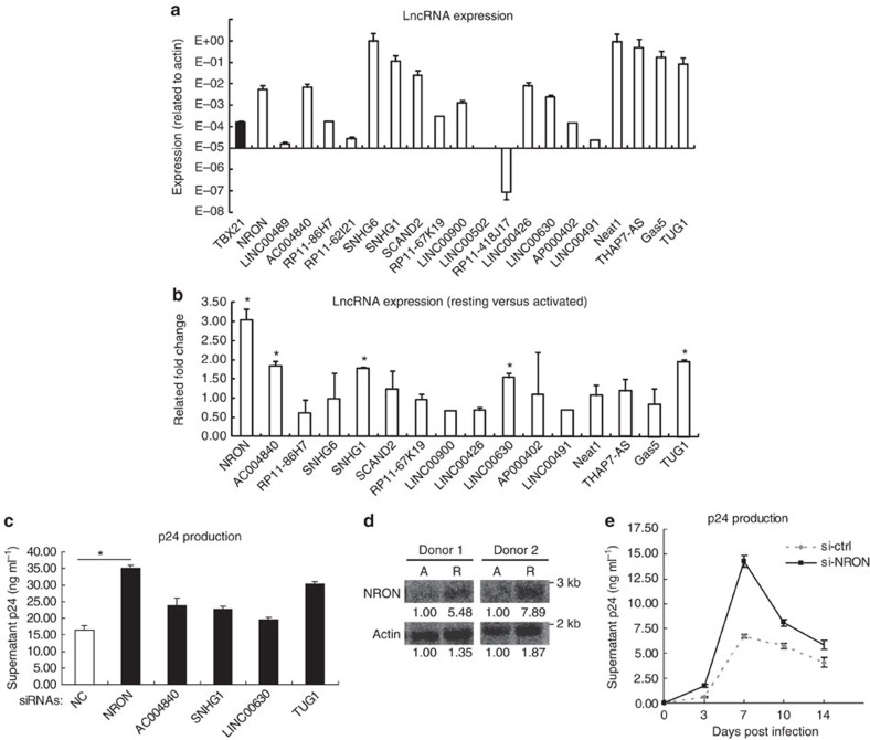 LncRNA NRON represses HIV-1 replication. ( a ) The expression levels of lncRNAs in activated primary CD4 +  T lymphocytes were detected with real-time qRT–PCR. The expression of  T-bet  was detected as positive control ( n =3). ( b ) Real-time qRT–PCR detection of the lncRNAs expression level differences between the resting and activated primary CD4 +  T lymphocytes from a same donor ( n =3). ( c ) The activated primary CD4 +  T lymphocytes were transfected with siRNAs against indicated lncRNAs or nonspecific control and were infected with HIV-1 NL4-3  viruses. HIV-1 productions in the cultures were detected by p24 ELISA at 7 days post infection ( n =3). ( d ) Northern blotting detection of NRON expression in the resting (R) or activated (A) primary CD4 +  T lymphocytes from the same donors. Numbers indicated the fold change related to control. ( e ) The activated primary CD4 +  T lymphocytes were transfected with siRNAs against NRON or nonspecific control and were infected with HIV-1 NL4-3  viruses. HIV-1 productions in the cultures were detected with p24 ELISA at indicated time points post infection ( n =3). The results in  a – c , e  show mean±s.d. (error bars). * P