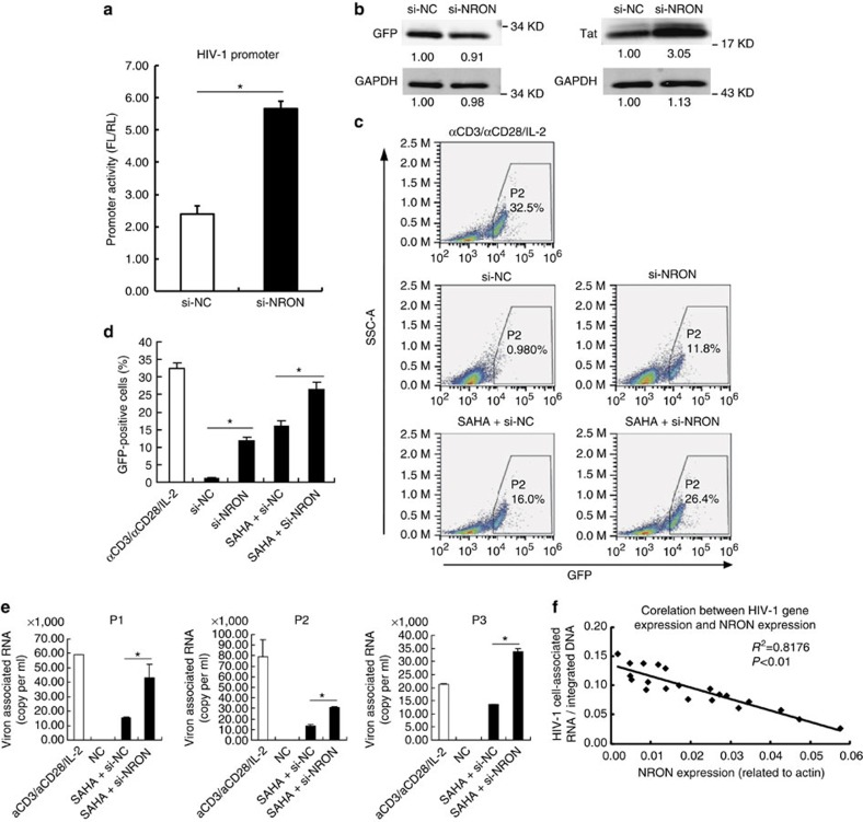 Depletion of NRON reactivates HIV-1 viruses in latently infected CD4 +  T lymphocytes. ( a ) Primary resting CD4 +  T lymphocytes were nucleofected with HIV-1 promoter reporter system plasmids, pcDNA3.1-Tat-HA and siRNAs against NRON or nonspecific control. The promoter activity was determined with dual-luciferase reporter assay at 48h after transfection ( n =3). ( b ) Tat and control GFP were detected by western blotting on NRON knockdown in nucleofected primary resting CD4 +  T lymphocytes. Numbers indicated the fold change related to the control. ( c ) The latently infected cells were transfected with NRON siRNAs or nonspecific control, or were transfected with siRNAs in combination with the treatment of SAHA, and detected by FACS at 48–72h post transfection. The GFP+ ratio indicated the reactivation level ( d ;  n =3). ( e ) Resting CD4 +  T lymphocytes isolated from HIV-1-infected individuals on suppressive cART were transfected with siRNAs in combination with the treatment of SAHA. After 48h, HIV-1 virion-associated RNAs in the supernatants were isolated and detected with real-time qRT–PCR ( n =3). ( f ) The intracellular HIV-1 RNA and NRON RNA expression levels were detected in resting CD4 +  T lymphocytes isolated from HIV-1-infected individuals on suppressive cART ( n =20), and the correlation between the HIV-1 RNA and NRON RNA levels was shown. The simple linear regression analysis was performed and linear regression line was shown. Data in  a , d , e  show mean±s.d. (error bars). Results in  b  represent three independent experiments. * P