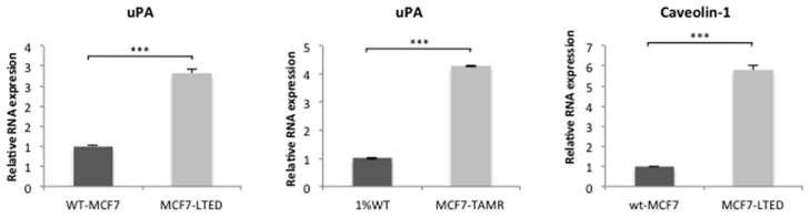 Expression of uPA and Caveolin-1 in endocrine-resistant versus sensitive cell lines. Assessment of mRNA relative expression of uPA and Caveolin-1 using qPCR in wt-MCF7, MCF7-LTED, 1%MCF7 and MCF7-TAMR cell lines. Bars represent ± SEM. *p