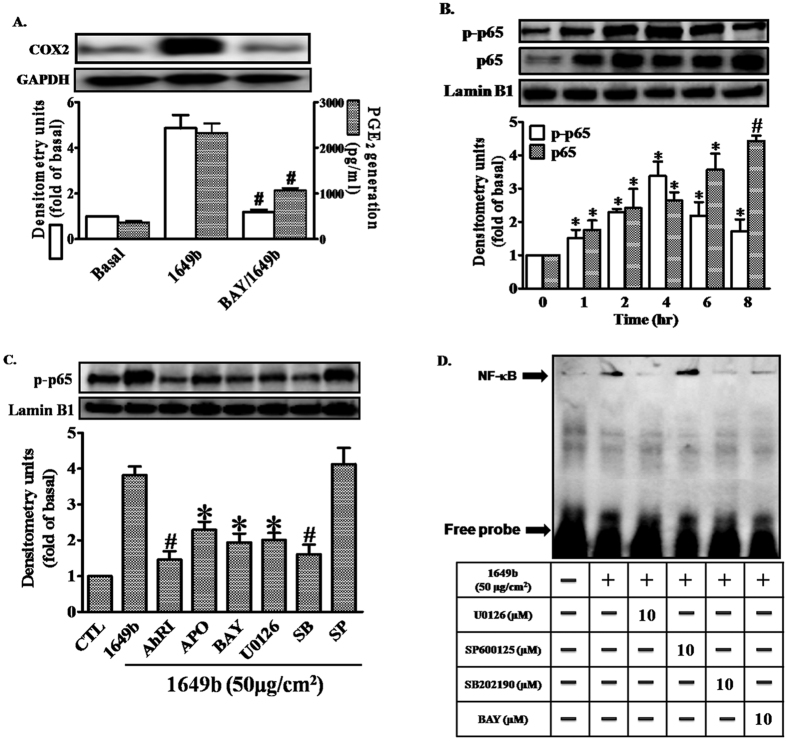 """PMs induce COX2 expression via Nox2/ERK/p38/NF-κB signaling. Cells were pre-incubated with NF-κB inhibitor (Bay11-7082; BAY) (10 μM) for 1 h and then exposed to PMs (50 μg/cm 2 ) for 24 h. ( A) COX2 protein expression (open bars) and prostaglandin E2 (PGE2) production (shaded bars) were determined by Western blotting and ELISA as described in Fig. 1 . ( B,C ) Cells were pre-incubated with with AhRI (10 μM), APO (100 μM), U0126 (10 μM), SB202190 (10 μM), SP60015 (10 μM) or BAY (10 μM) for 1 h and then exposed to PMs (50 μg/cm 2 ) for the 2 h. The levels of p65 in nuclear extract (detected with p65 or phospho-p65 antibodies), determined by Western blotting (C) . Lamin-B1 was used as the loading control. ( D) Cells were pre-incubated with with U0126 (10 μM), SB202190 (10 μM), SP60015 (10 μM) or BAY (10 μM) for 1 h and then exposed to PMs (50 μg/cm 2 ) for 2 h. Electrophoretic mobility-shift assay for assessment of NF-κB DNA binding activity, as described in """"Materials and methods"""". ( A–D ) Data are expressed as mean ± standard error of the mean, based on three independent experiments. * P"""