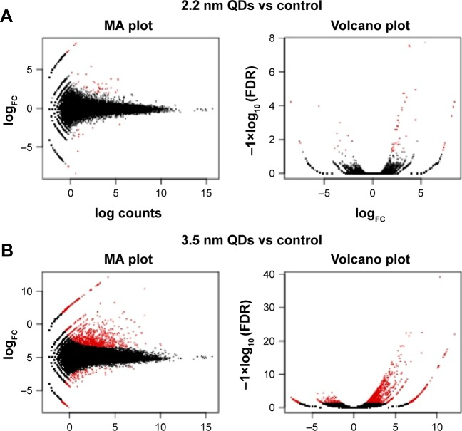 MA plots and volcano diagrams representing differently expressed genes. Notes: MPA-capped CdTe QD (2.2 nm) treatment ( A ) and MPA-capped CdTe QD (3.5 nm) treatment ( B ), with the control (red dots indicating significantly expressed genes and black dots indicating insignificantly expressed genes). Abbreviations: MPA, 3-mercaptopropionic acid; QDs, quantum dot; FC, fold change; FDR, false-discovery rate.
