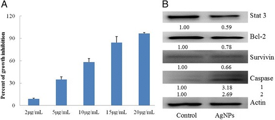 The anticancer effects of AgNPs on the PC-3 cells, a cytotoxic effects and b effects of the level of phosphorylated stat 3, bcl-2, survivin, and caspase-3