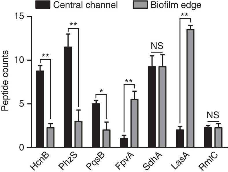Bottom-up proteomics reveals repression of anti-staphylococcal biosynthetic proteins in the edge of the P. aeruginosa biofilm. HcnB, PhzS and PqsB are components of various anti-staphylococcal biosynthetic pathways that were found in lower abundance in the biofilm edge. While expression of the corresponding genes has been shown to be both Fe and quorum sensing (QS)-regulated, the proteins' distribution profiles did not correlate with those of known Fe-responsive proteins such as FpvA and SdhA or proteins encoded by known QS-responsive genes such as LasA and RmlC. Error bars are s.e.m. derived from biological triplicate samples processed in four technical replicates per biofilm. '*' denotes P