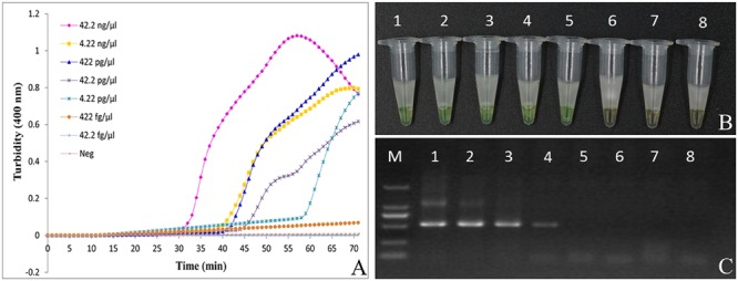Comparison of sensitivity between the LAMP reaction and conventional PCR for detection of Aristolochiae Manshuriensis Caulis. The pure genomic DNA extracted from Aristolochia manshuriensis was diluted in a serial 10-fold dilution. Both LAMP reaction (A) and (B) and conventional PCR (C) were carried out in duplicate for each dilution point. Tubes and lanes: 1, 42.2 ng/μl; 2, 4.22 ng/μl; 3, 422 pg/μl; 4, 42.2 pg/μl; 5, 4.22 pg/μl; 6, 422 fg/μl; 7, 42.2 fg/μl; 8, Neg, negative control (double-distilled water). (A) Turbidity was monitored by a Loopamp real-time turbidimeter at 400 nm every 6 s; (B) A visual color change detection method was compared. 1μl of calcein (fluorescent detection reagent) was added to 25 μl of LAMP reaction mixture before the LAMP reaction; (C) The PCR products were detected by 1% agarose gel electrophoresis.