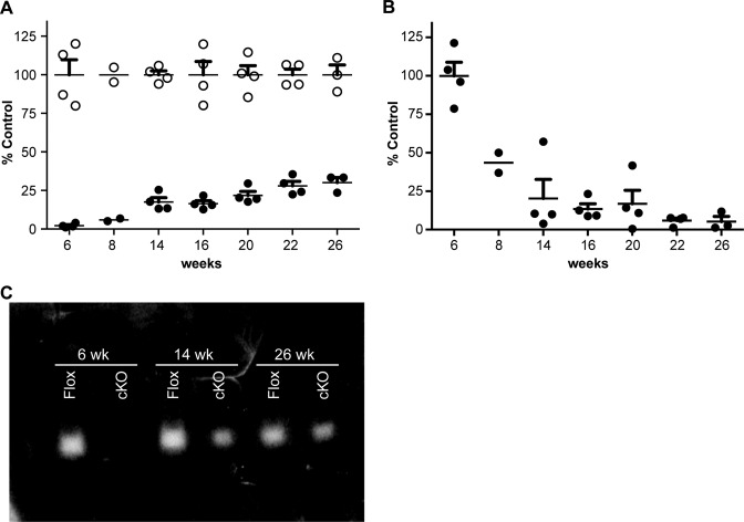 RNase H1 expression and activity in constitutive RNase H1 knockout mice as a function of age. ( A ) RNase H1 mRNA expression levels in hepatocytes from RNase H1 floxed (open circles) and cKO mice (solid circles) were determined by qRT-PCR. ( B ) Cre mRNA expression levels in hepatocytes from cKO mice (solid circles) were determined by qRT-PCR. Data are the means of four animals per group, with the exception of week 8 ( n = 2) and week 26 ( n = 3). The error bars represent ± SEM. ( C ) Gel renaturation assay showing RNase H1 activity in hepatocytes from 6, 14 and 26 week old RNase H1 floxed (Flox) and cKO mice. Each lane is representative of hepatocytes RNase H activity from one mouse. The experiments were performed three times and representative results are shown.