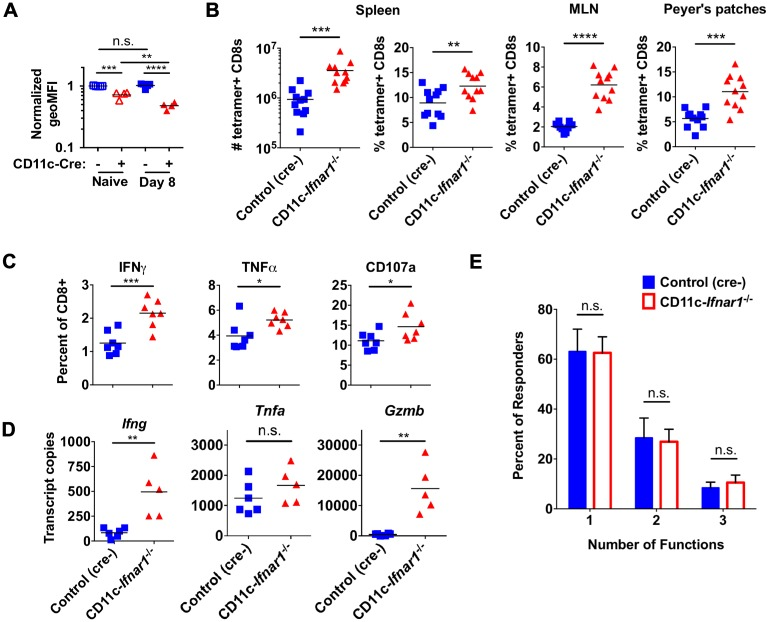 CW3 persistence in CD11c- Ifnar1 -/- mice is associated with enhanced CD8 T cell expansion. Cells were collected from spleens, MLNs, or Peyer's patches of CD11c- Ifnar1 -/- mice and controls eight days after infection with CW3. ( A ) Total CD8 T cells were analyzed for expression of IFNAR1. ( B ) The number or percentage of CW3-tetramer positive CD8 T cells was determined by flow cytometry from the indicated tissue. ( C ) Splenocytes were stimulated ex vivo with CW3 peptide and stained for cell surface CD107a and intracellular IFNγ and TNFα. ( D ) RNA extracted from spleens was used to quantitate transcripts for Ifng , Tnfa , and Gzmb . ( E ) The percentage of cells in (C) positive for one, two, or three of the markers of activation is shown. Data in (B) is combined from three experiments and data in (A), (C), (D) and (E) is combined from two experiments with seven mice per data point in (E). Statistical significance was determined by unpaired t test (B, C and D) or 2-way ANOVA (A and C). n.s = p > 0.05, * = p≤0.05, ** = p≤0.01, *** = p≤0.001, **** = p≤0.0001.
