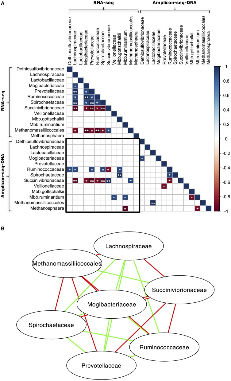 Co-occurrence of abundant microbial taxa in the RNA-seq and DNA Amplicon-seq datasets. (A) Correlation matrix of abundant microbial taxa and (B) Network of abundant microbial taxa in the RNA-seq dataset. Only bacterial families and archeael taxa with a relative abundance > 0.1% and detected in all five rumen samples using both RNA-seq and DNA Amplicon-seq were analyzed using Spearman's rank correlation. The RNA Amplicon-seq dataset was not included into the analysis, because its bacterial and archaeal profiles were similar to profiles from the RNA-seq dataset. In (A) , the sub-matrix surrounded by the black square exhibits correlations between taxa in the RNA-seq and DNA Amplicon-seq datasets. Strong correlations (Spearman's rank correlation coefficient [ρ] ≥ 0.9 or ≤ −0.9) were displayed with * (0.05