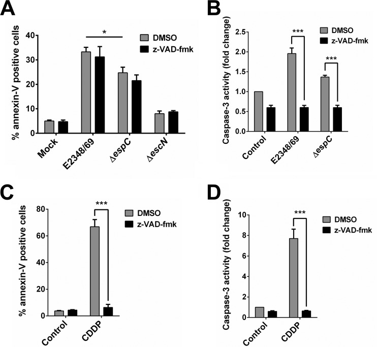EspC also induces caspase-independent cell death. (A and C) Caspase inhibition does not block apoptosis induced by EPEC. HEp-2 cells were pretreated with 50 µM z-VAD-fmk or only DMSO for 1 h. Cells were infected with the EPEC WT, Δ espC , or Δ escN strain at an MOI of 10 for 4 h (A) or treated with 100 µM cisplatin (CDDP) for 18 h (C). Mock-infected cells were used as a negative control. Cells were harvested and labeled with annexin V and analyzed by flow cytometry. Annexin V-positive cells were considered apoptotic cells. (B and D) Caspase inhibition blocks caspase-3 activity induced by EPEC. Activity of caspase-3 was determined in HEp-2 cells pretreated with 50 µM z-VAD-fmk or only DMSO for 1 h and infected with the EPEC WT or Δ espC strain at an MOI of 10 for 4 h (B) or 100 µM CDDP for 18 h (D). The whole-cell lysates were subjected to the caspase-3 activity assay as described in Materials and Methods. Activity is represented as fold change relative to uninfected cells. Data are expressed as the mean ± SEM from at least 3 independent experiments. Statistical analysis was performed using two-way ANOVA followed by Bonferroni's multiple comparison test (*, P