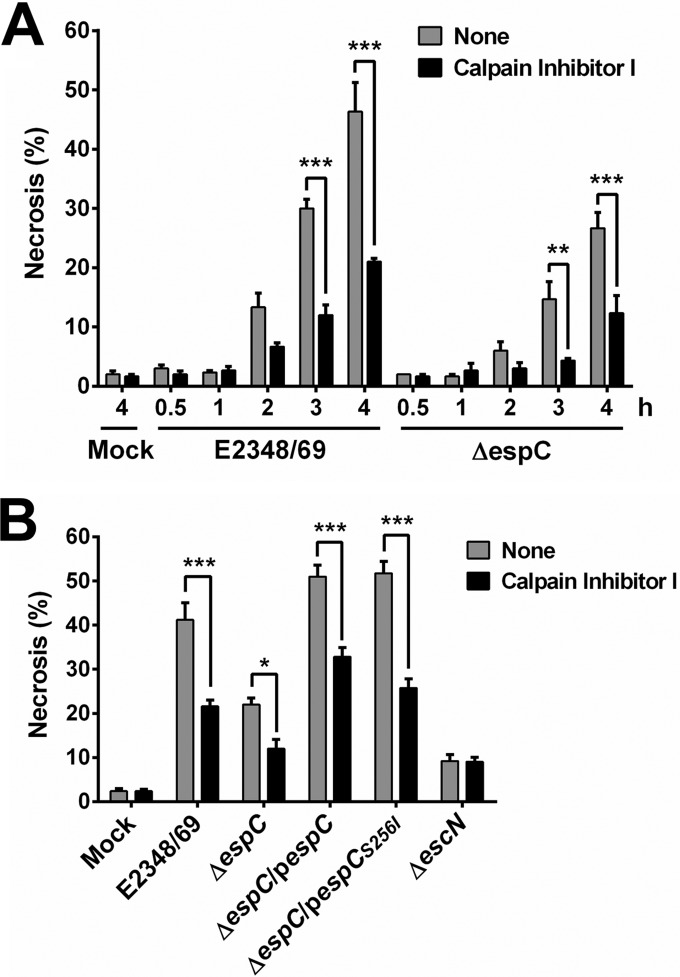 EspC induces necrosis through calpain activation. (A) Kinetics of necrosis induction by the EPEC WT and Δ espC mutant and their inhibition by a calpain inhibitor. HEp-2 cells were pretreated with 50 µM calpain inhibitor I for 1 h or untreated. Cells were infected with either the EPEC WT or Δ espC mutant at an MOI of 10 for the indicated times. Cells were harvested, labeled with annexin V/PI, and analyzed by flow cytometry. Annexin V-negative and PI-positive cells were considered necrotic cells. (B) Comparison of cells infected with the different bacterial strains for 4 h. Cells were infected with the indicated strains, processed, and analyzed as indicated above. Data are shown as the mean ± SEM from at least 3 independent experiments. Statistical analyses were performed using (A) unpaired t test (**, P