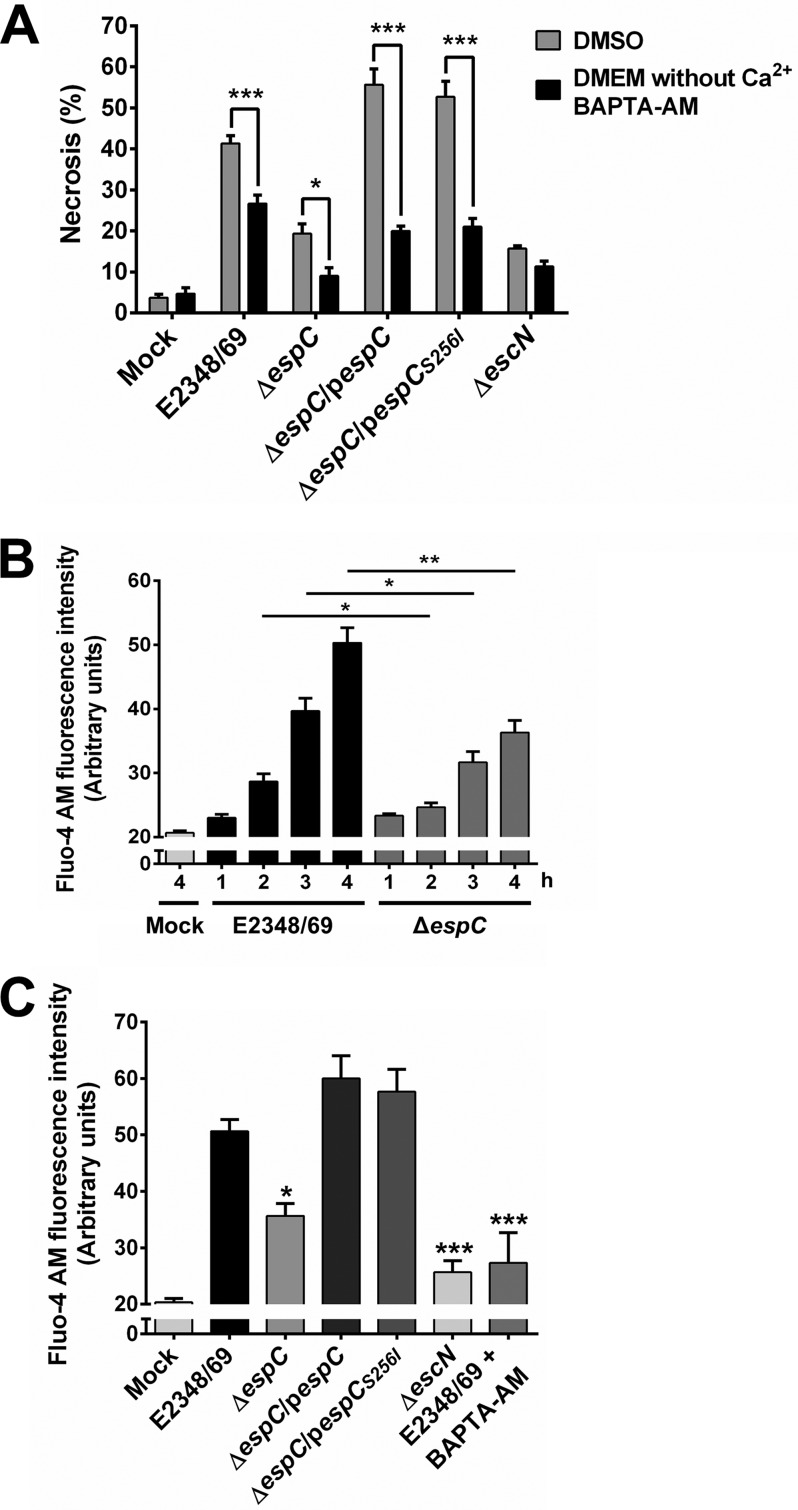 EspC induces an increase in intracellular Ca 2+ associated with necrosis. (A) Intracellular calcium chelation causes a decrease in the necrosis induced by EspC. HEp-2 cells were pretreated with 20 µM BAPTA-AM or only DMSO for 1 h. HEp-2 cells were infected with the indicated bacterial strains at an MOI of 10 for 4 h. Cells were harvested and labeled with annexin V and PI and analyzed by flow cytometry. Annexin V-negative and PI-positive cells were considered necrotic cells. Data are shown as the mean ± SEM from at least 3 independent experiments. Statistical analysis was performed using two-way ANOVA followed by Bonferroni's multiple comparison test (*, P