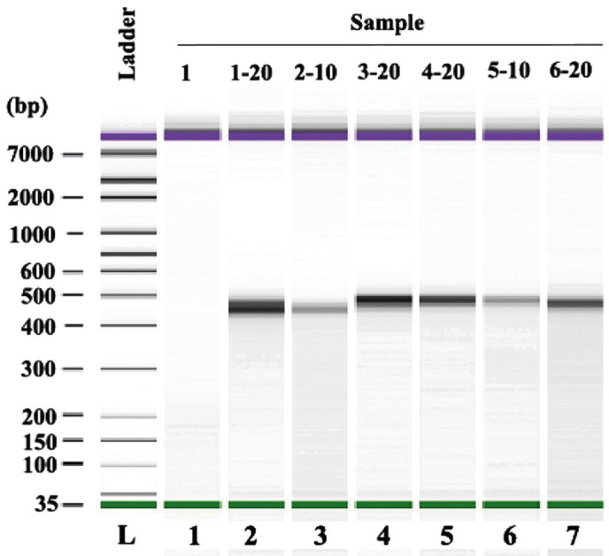 Mimic diagram of size distribution of polymerase chain reaction products with Agilent 2100 Bioanalyzer system analysis.