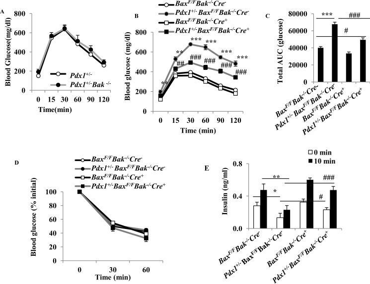 Bax gene ablation in islets inhibits diabetes in Pdx1 +/− Bax F/F Bak −/− Cre − mice. A and B , blood glucose levels after intraperitoneal injection of dextrose (1 g/kg) in the male mice on a HFD for 13 weeks. **, p