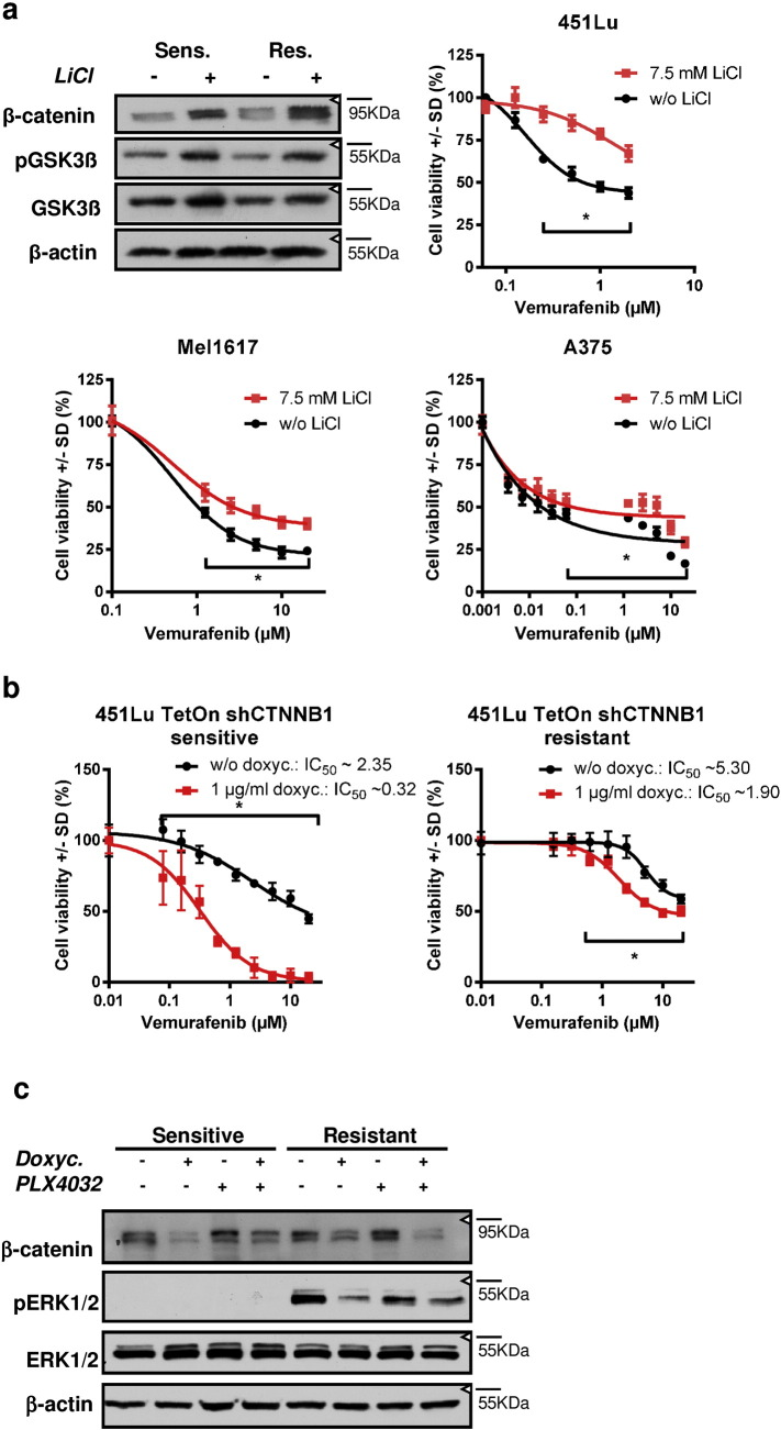 Beta-catenin is directly involved in the efficacy of the response to BRAFi and suppresses growth inhibition a) Cell viability assay (MUH) of melanoma cell lines pre-treated with 7.5 mM LiCl for 24 h for stabilization of β-catenin. Immunoblots show the stabilization of β-catenin after treatment of 451Lu cells with LiCl. After the pre-treatment, cells were treated with increasing concentrations of vemurafenib for 72 h before the assessment of cell viability. Black symbols represent sensitive control cells and red symbols represent LiCl pre-treated cells. Signals were normalized to the control cells without vemurafenib treatment. Mean +/ SD values of six replicates are shown. Multiple t-tests with Holm–Šídák correction were used to compare data points of the two curves and p