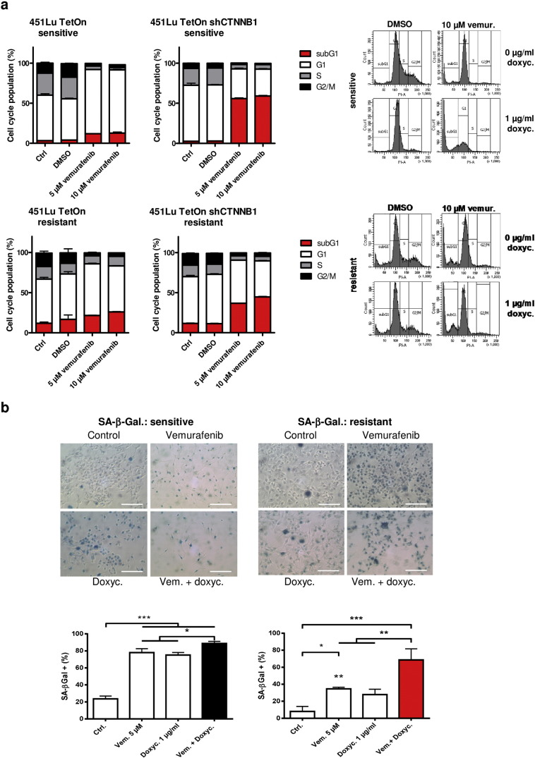 Knockdown of β-catenin enhances the BRAFi mediated induction of apoptosis and senescence. a) Cell cycle analysis of Tet-inducible 451LuTet-S (upper panel) and 451LuTet-R (lower panel) cells after treatment with 5 or 10 μM vemurafenib for 72 h. Doxycycline pre-treatment for 24 h (right bar diagrams) was used to induce β-catenin specific shRNA. Representative FACS histograms of the cell cycle analysis comparing vehicle (DMSO) treated cells with vemurafenib (10 μM) are shown. Cell cycle distributions represent the result of three biologic replicates (mean +/− SD). b) SA-associated β-galactosidase staining after 72 h of vemurafenib treatment of the above mentioned Tet-inducible cells (scale bars represent 200 μm). Clear blue cells were counted and normalized to the total number of cells using four different microscopic pictures (top row) per treatment. Mean numbers +/− SD are shown from three independent biological replicates (bottom row). ANOVA analyis was performed using Tukey's multiple comparisons test (asterisks).