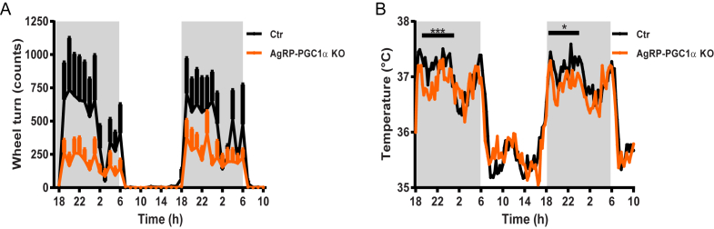 PGC-1α deletion in AgRP neurons reduces energy expenditure . ( A ) Voluntary activity measured by running wheel revolutions in AgRP-PGC1α KO and Ctr mice (n = 5–6). Values represent 2 weeks of measurements. ( B ) Basal body temperature measured during 48-h in AgRP-PGC1α KO and Ctr mice (n = 7–8) in the absence of running wheel. Values and error bars represent the mean ± SEM. *p