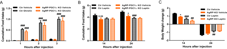 PGC-1α deletion in AgRP neurons alters response to leptin . ( A ) Food intake of AgRP-PGC1α KO and Ctr mice 1, 2 and 3 h after ghrelin or vehicle injection (n = 8). ( B and C ) Feeding response and body weight changes of 8 weeks old AgRP-PGC1α KO and Ctr individually housed-mice 16 and 24 h after leptin or vehicle injection (n = 8). A second injection was performed 16 h later. Values and error bars represent the mean ± SEM. *p