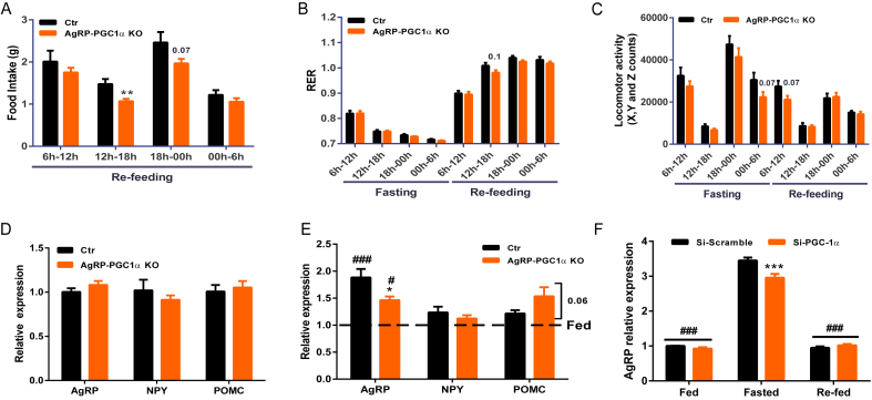 PGC-1α deletion in AgRP neurons impairs energy homeostasis and hypothalamic signaling in response to fasting . ( A ) Food intake, ( B ) respiratory exchange ratio and ( C ) spontaneous locomotion in AgRP-PGC1α KO and Ctr mice measured with CLAMS during fasting and refeeding (n = 7–8). ( D and E ) AgRP, NPY and POMC mRNA levels in the hypothalamus of AgRP-PGC1α KO and Ctr in fed and overnight fasted mice measured by qPCR (n = 4–8). Data are normalized by mRNA values of fed animals. ( F ) AgRP mRNA level in fed, 4-hours starved and 1-hour refed hypothalamic cells measured by qPCR (n = 3). Values and error bars represent the mean ± SEM. *p
