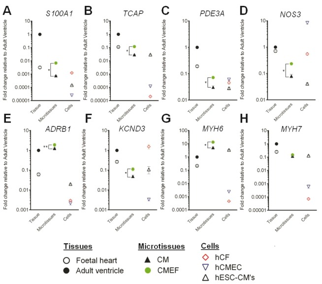 Gene expression upregulation in cardiac microtissues. Fold change of (A) S100A1 , (B) TCAP , (C) PDE3A , (D) NOS3 , (E) ADRB1 , (F) KCND3 , (G) MYH6 , and (H) MYH7 mRNA expression in foetal heart tissue, cardiac microtissues, and individual cardiac cells relative to adult heart tissue (n = 3, ± SD) was determined by qRT-PCR. * P -value