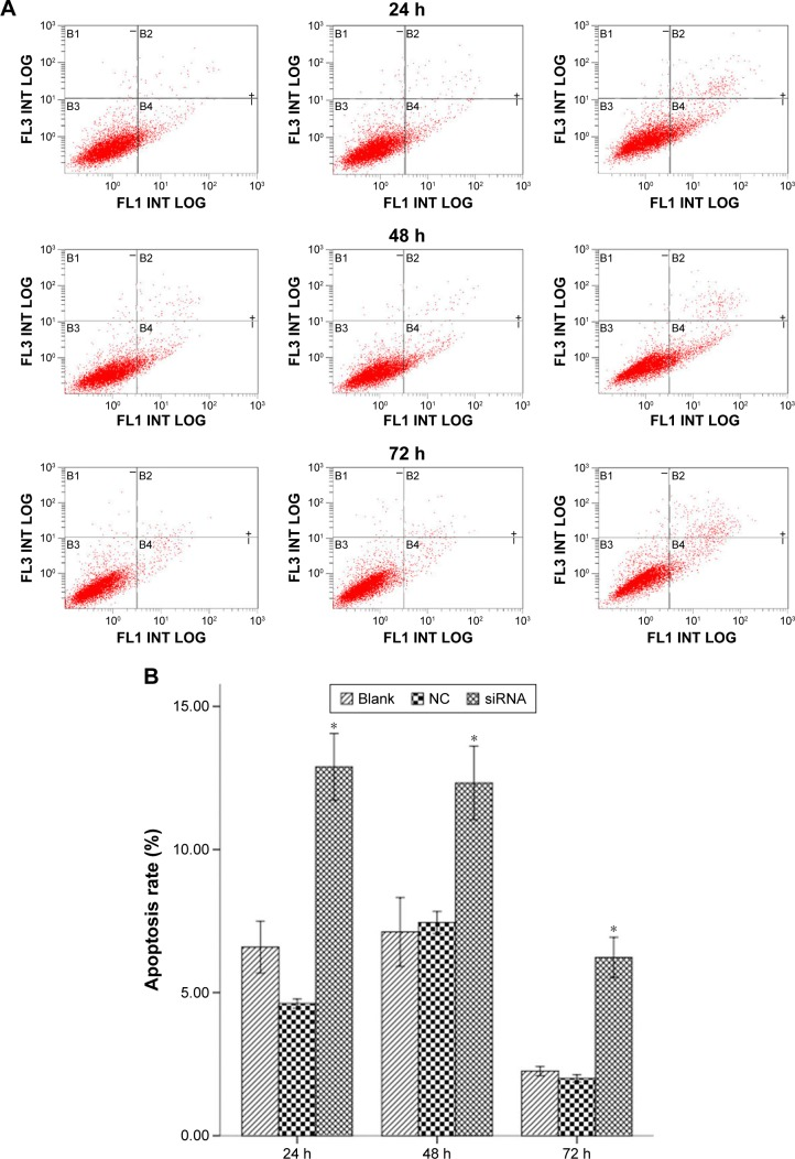 Flow cytometry analysis for apoptotic cells with annexin V/PI. Notes: ( A ) Representative flow cytometry results of cell apoptosis. B1, dead cells; B2, late apoptosis; B3, viable cells; B4, early apoptotic cells. ( B ) The columns illustrate the flow cytometric results of the apoptosis rate. Data are presented as the mean ± SD of three independent experiments. * P