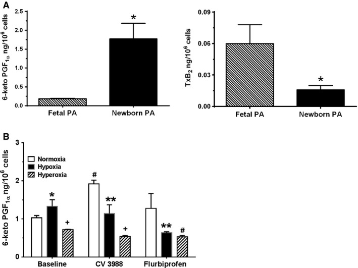 A, Baseline production of prostacyclin and thromboxane by fetal and newborn pulmonary artery smooth muscle cells (PASMC). Release of prostacyclin ( PGI 2) and thromboxane (TxA2) by fetal and newborn PASMC at baseline was measured by ELISA of their respective stable metabolites 6‐keto‐ PGF 1 α and <t>TxB2.</t> Data are mean + SEM, n = 6. Production of 6‐keto‐ PGF 1 α by newborn PASMC was ninefold greater than by fetal PASMC , whereas baseline production of TxB2 by newborn PA was sevenfold less. * P