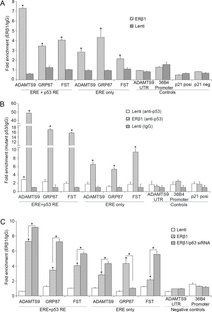 ERβ1 binds to promoters of mutant p53 target genes ( A ) Chromatin <t>immunoprecipitation</t> (ChIP) analysis in control and ERβ1-expressing MDA-MB-231 cells for the presence of ERβ1 at sites of mutant p53 target genes that contain both ERE and p53REs or exclusively ERE ( Follistatin , FST ). ERE/p53REs-negative sites from 36B4 promoter and downstream of the ADAMTS9 gene and a 5′ p53RE from p21 promoter that binds wild-type p53 were used as controls. Anti-FLAG antibody was used to immunoprecipitate ERβ1 and normal mouse IgG was used as experimental control. Fold enrichment of p53 target sequences was normalized to IgG ChIP. ( B ) ChIP analysis for binding of mutant p53 at sites of mutant p53 target genes in control and ERβ1-expressing MDA-MB-231 cells. ( C ) ChIP analysis for the presence of ERβ1 at sites of mutant p53 target genes in control and ERβ1-expressing MDA-MB-231 cells following transfection with control or p63 siRNA (#1). Fold enrichment of target sequences in ERβ1 precipitates was normalized to that of IgG precipitates. All graphs represent the mean ± SEM of three experiments; * P ≤ 0.05.