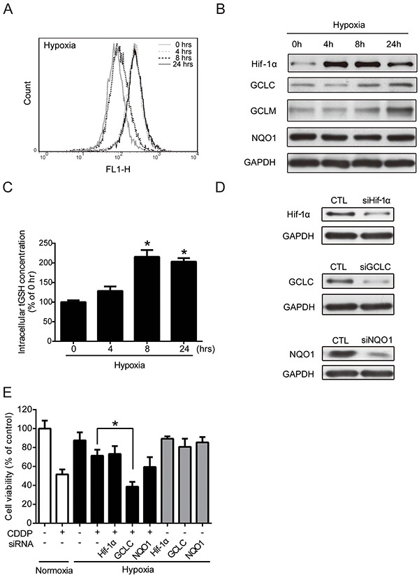 Regulation of antioxidant enzyme activities leads to the alteration of drug resistance under hypoxia A-D. MCF7 cells were exposed to hypoxia for 0, 4, 8, 24 hours. (A) The intracellular ROS levels were detected by flow cytometry with DCFHDA staining. (B) The total proteins were extracted from the cells and the Hif-1α, NQO1, GCLC, GCLM, GAPDH levels were detected by western blot. (C) The intracellular total GSH (tGSH) activities were measured by glutathione assay. N=3, *, P