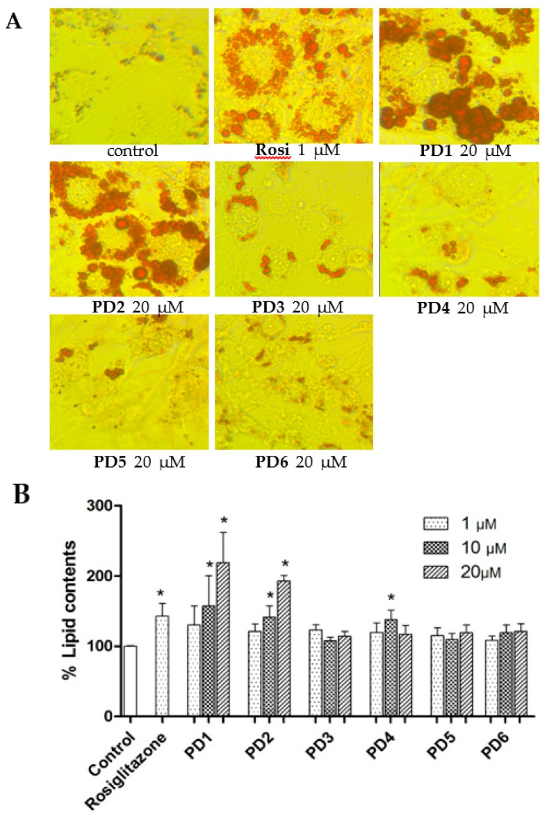 Effects of PD1–PD6 on adipocyte differentiation of 3T3-L1 cells. The 3T3-L1 cells were exposed to 10% FBS/DMEM containing 10 μg/mL insulin and 1 μM dexamethasone in the presence of various concentrations (1, 10, or 20 μΜ) of PD1 – PD6 or rosiglitazone (1 μΜ). After eight days, treated cells were stained with Oil red O for morphological assessment by microscopy ( A ) and lipid contents was determined using an <t>iMark</t> <t>Microplate</t> Absorbance Reader ( B ). The results shown are representative of three independent experiments, and are presented as means ± SDs ( n = 3). * p